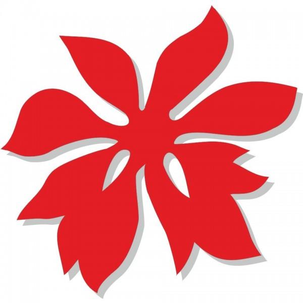 Stelle Di Natale - 5 stelle di nat.